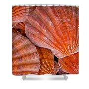 Red Orange Sea Shells Shower Curtain