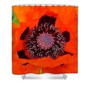 Red Oriental Poppy Shower Curtain