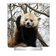 Red Panda Bear In A Tree Shower Curtain