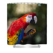 Red Parrot  Shower Curtain