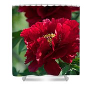 Red Party Shower Curtain