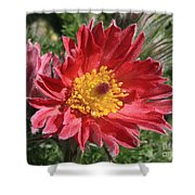 Red Pasque Flower Shower Curtain