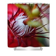 Red Passion Flower Stamens Shower Curtain
