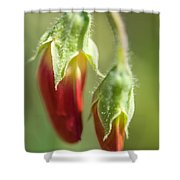 Red Pea Buds Shower Curtain