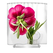 Red Peony Flower Back Shower Curtain
