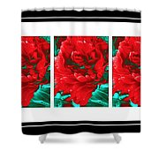 Red Peony Triptych Shower Curtain