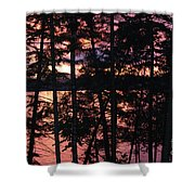 Red Pines Shower Curtain