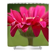 Red Pink Daisy Shower Curtain
