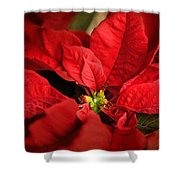 Red Poinsettia 2 Shower Curtain