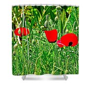 Red Poppies Near Meryem Ana Evi-cottage Believed To Be Mary's Last Home-turkey Shower Curtain