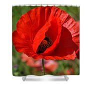 Red Poppy 2 Shower Curtain