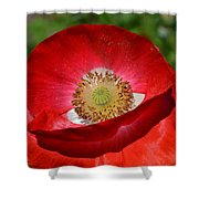 Red Poppy 3 Shower Curtain