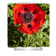 Red Poppy And Bee Shower Curtain
