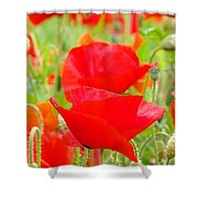 Red Poppy Flowers Art Prints Floral Shower Curtain