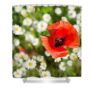 Red Poppy With Daisies On Flower Meadow Shower Curtain