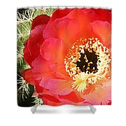Red Prickly Pear Blossom Shower Curtain