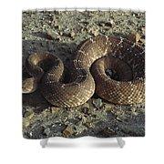 Red Rattlesnake Baja California Mexico Shower Curtain