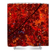 Red Red And Red Shower Curtain