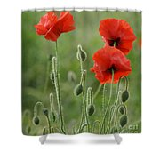 Red Red Poppies 1 Shower Curtain