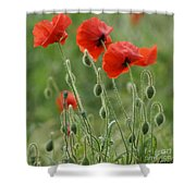 Red Red Poppies 2 Shower Curtain