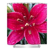 Red Refreshed Lily Shower Curtain