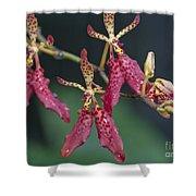 Red Renanthera John Losgar 2190 Shower Curtain