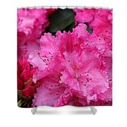 Red Rhododendrons Shower Curtain