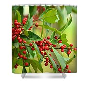 Red Ripe Berries Shower Curtain