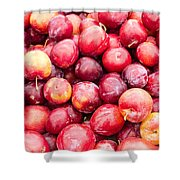 Red Ripe Plums Shower Curtain