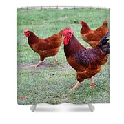 Red Rooster And Hens Shower Curtain