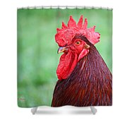 Red Rooster Portrait Shower Curtain