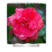 Savannah Ga Red Rose After A Rain Shower Curtain