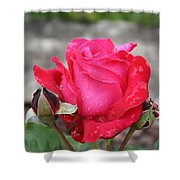 Red Rose And Dewtrops Shower Curtain