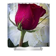 Red Rose And Kale Flower Shower Curtain