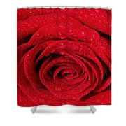 Red Rose And Water Drops Shower Curtain