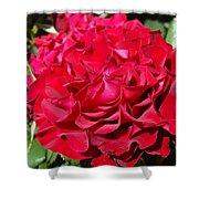 Red Rose Art Prints Big Roses Floral Shower Curtain