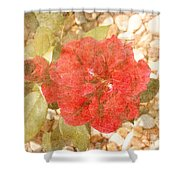 Red Rose At Noon Shower Curtain