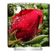 Red Rose Bud With Water Drops Shower Curtain