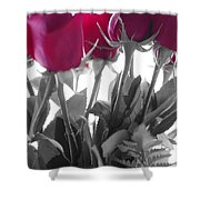 Red Rose Color Block Shower Curtain