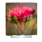 Red Rose Flourish Shower Curtain