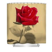 Red Rose Flower Isolated On Sepia Background Shower Curtain