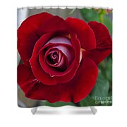 Red Rose Flower Shower Curtain