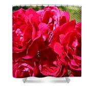 Red Rose Garden Art Prints Roses Shower Curtain