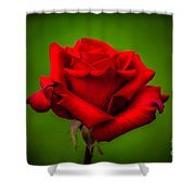 Red Rose Green Background Shower Curtain by Az Jackson
