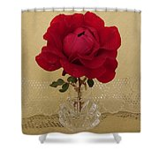 red rose III Shower Curtain