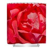 Red Rose Macro Shower Curtain
