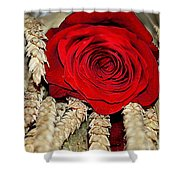 Red Rose On A Bed Of Wheat Shower Curtain