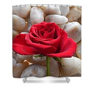 Red Rose On River Rocks 2 Shower Curtain