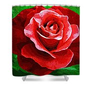 Red Rose Radiance Shower Curtain