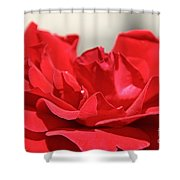 Red Rose Red Rose Shower Curtain